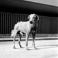 Dog on street in Chetumal, Mexico 1993