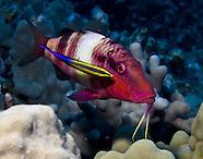 Hawaii - Kona Ocean Life