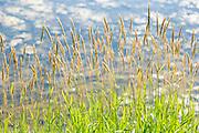 Grasses, Rest Stop, Summer Day, Landis