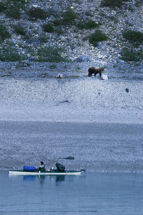 A brown bear walks down the beach looking down on two kayakers in Glacier Bay.