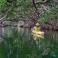Kayakers paddling in a mangrove tunnel near Key Largo, Florida.