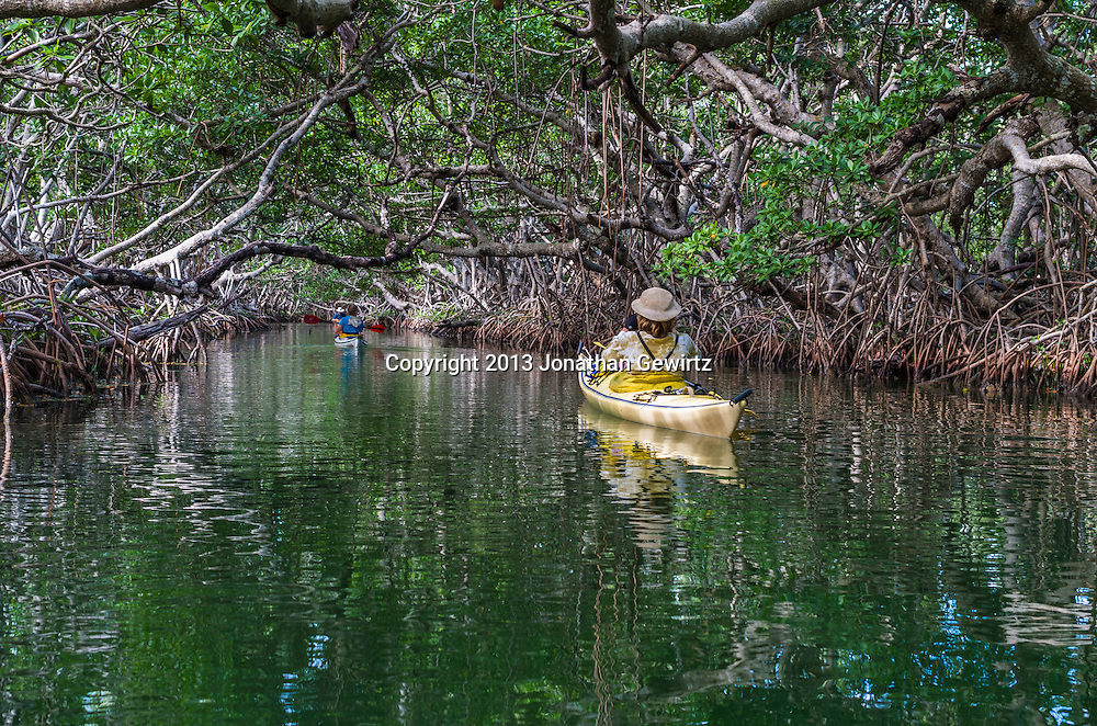 Kayakers paddling in a mangrove tunnel near Key Largo, Florida. WATERMARKS WILL NOT APPEAR ON PRINTS OR LICENSED IMAGES.