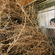 Christian Madden Jr,  of Clovis, looks out his window to see tumbleweeds piled high blocking the front door on Tuesday, November 14, 2006. Clovis experienced sustained winds of 38 miles per hour with gust over 50.