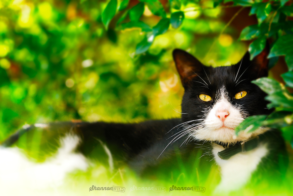 Black and white cat in dappled light under a tree.