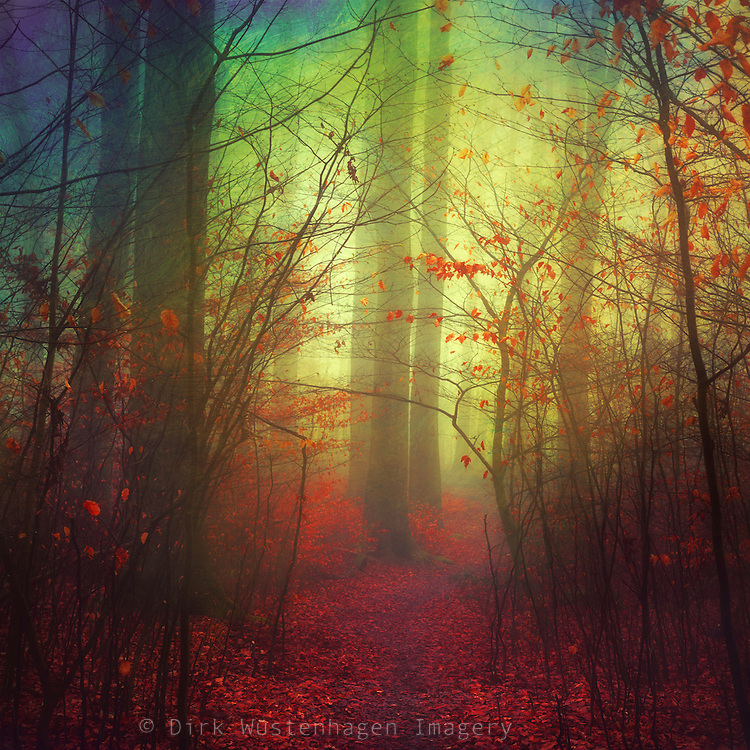 fantastic forest scenery<br /> Prints &amp; more here:<br /> https://society6.com/product/the-way-in-variation_print#1=45