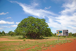 A magnificent boab with a dark green canopy stands beside the sign marking the turnoff to the main Broome highway.