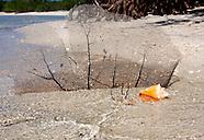 Cuban Beaches & Shorelines.