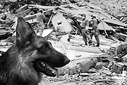 Some of the buildings destryed by the earthquake in Beichuan. Rescue workers using specialist equipment and trained sniffer dogs continue to search for possible survivors whilst placing markers at the bodies that cant be immediately be removed without assistance from lifting gear.