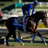New Years Day trains for the Breeders' Cup Juvenile at Santa Anita Park in Arcadia, California on October 31, 2013. (Alex Evers/ Eclipse Sportswire)