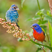 Birds North America