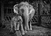 BuaThong and daughter Am at Anantara Golden Triangle Elephant Camp & Resort, near Chiang Rai, Thailand. PHOTO BY LEE CRAKER