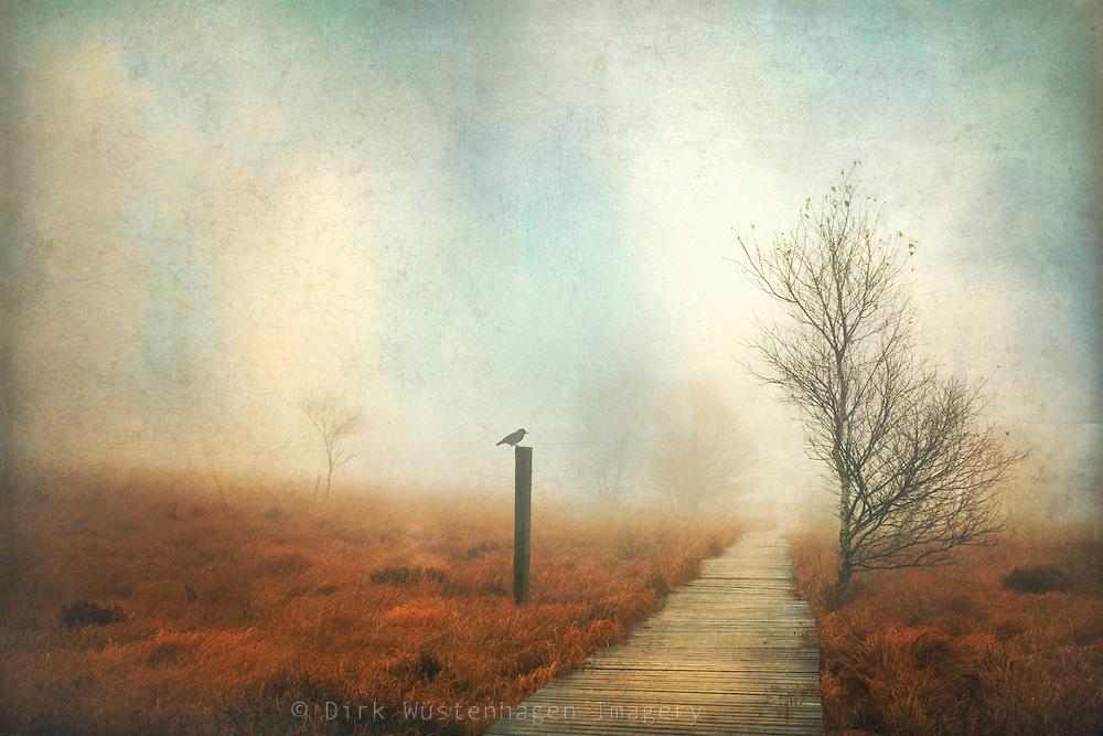 Hiking path through the High Fens, Belgium on a foggy November day.