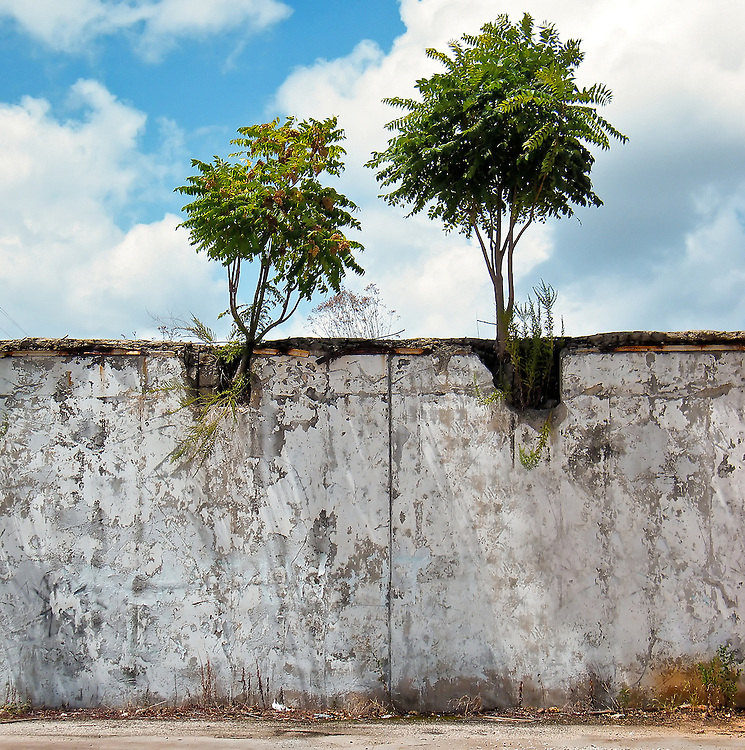 Wall with trees growing out of the top