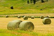 Hay bales in field, southwest Montana