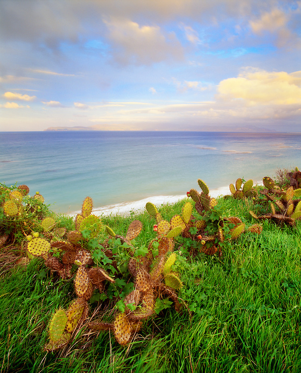 0603-5000  ~  Copyright:  George H. H. Huey ~  Prickly pear cactus [Opuntia littoralis] and curcurbit vine on cliff at Bechers Bay, sunset, Santa Rosa Island.  [Santa Cruz Island in distance.  Channel Islands National Park, California.