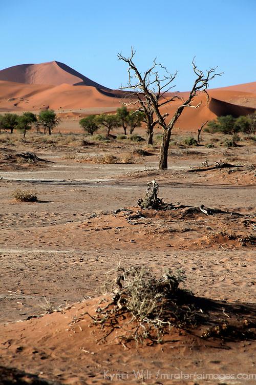 Africa, Namibia, Sossusvlei. Sossusvlei.