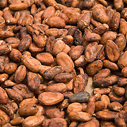 Cocoa beans dry in the sun at a farm in the town of Assin Adadientem, roughly 100km west of Ghana's capital Accra on Sat. January 21, 2007.