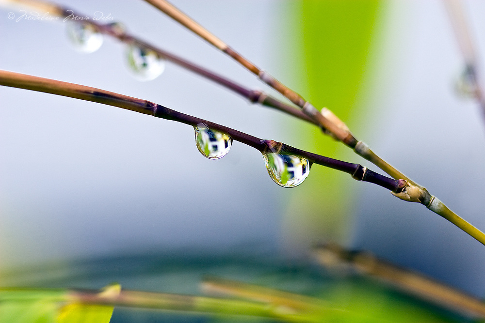 Rain drops with house reflection on bamboo / dr004