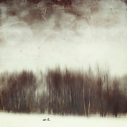 Abstract winter landscape with birds - textured &amp; manipulated photograph<br /> Society6 Prints: http://bit.ly/2erHuvv