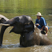 Elephants at the National Elephant Institute, Lampang, Thailand