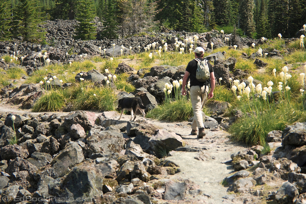 A man hikes with his dog along a trail through a lava flow on the south side of Mount St Helens National Monument, Gifford Pinchot National Forest, Washington, USA