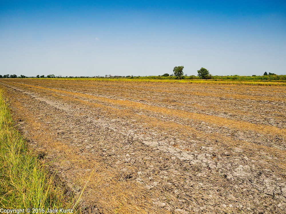 16 MARCH 2016 - BANG SOMBUN, NAKHON NAYOK, THAILAND: A harvested and dried out rice field at the end of the 2015 rice season in Nakhon Nayok province. Normally the farmers would plant a second crop of rice but they can't this year because their won't be enough water to irrigate the fields. The drought in Thailand is worsening and has spread to 14 provinces in the agricultural heartland of Thailand. Communities along the Bang Pakong River, which flows into the Gulf of Siam, have been especially hard hit since salt water has intruded into domestic water supplies as far upstream as Prachin Buri, about 100 miles from the mouth of the river at the Gulf of Siam. Water is being trucked to hospitals in the area because they can't use the salty water.      PHOTO BY JACK KURTZ