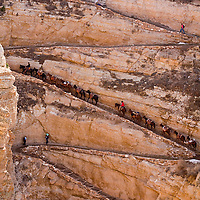 A Pack train moving up the South Kaibab trail in Grand Canyon National Park