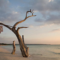 Jamaica, Negril, Setting sun lights bar sign hanging from tree limb along white stand beach by Caribbean Sea