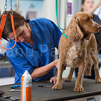 Dog Grooming 2014