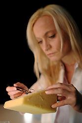 Behutsam fixiert Professorin Dr. Christine Radtke eine Goldene Radnetzspinne (Nephila clavipes), um die Spinnenseide zu gewinnen.