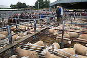 Norwich Livestock Market 2016 - Colour