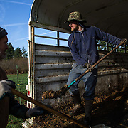 "Farmers Jerry Stokesberry and Alan ""Moe"" Rochester clean out a trailer to be used to transport organic turkeys at the Stokesberry Sustainable Farm near Olympia. ""Farming all comes down to increasing the health of our soil,"" said owner Jerry Stokesberry as he explained a system where he rotates turkeys and cattle in a symbiotic way that helps grass grow tall and the soil rich. (Joshua Trujillo, seattlepi.com)"