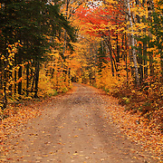 &quot;Autumnal Harmony&quot;<br />