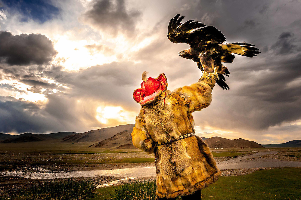 The Eagle Hunters of Mongolia. In the Altai Mountains of Mongolia, Kazakh tribes still hunt fox and wolf with golden eagles. The Kazakh are a semi-nomadic people who raise sheep and yaks for their main food source.<br /> Genghis Khan is said to have had over 5,000 &quot;eagle riders&quot; in his personal guard.