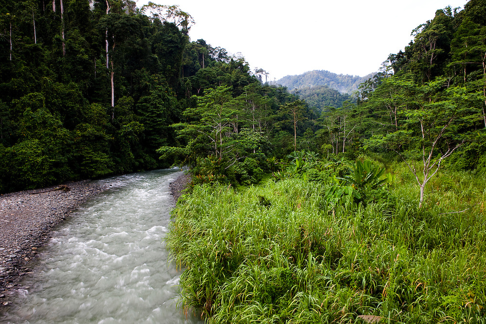 The Waramui River in the Kebar Mountains in the Manokwar region, Papua, Indonesia, Sept. 12, 2008..Daniel Beltra/Greenpeace