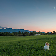 Lucy modeled last night, on our twilight walk with camera. This is the view behind our house from the farmer's hay field, looking S-SW towards the Olympic mountains. Goodnight, moon.