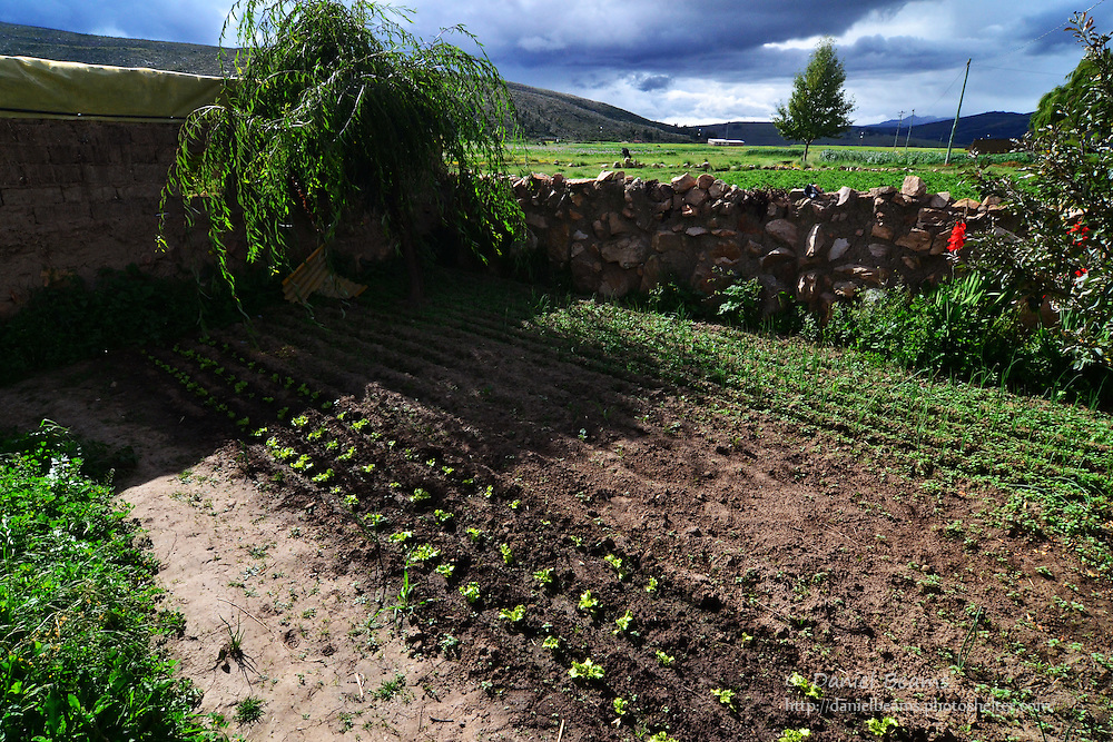 Vegetable garden at 12,000 ft in the Andes, Cochabamba, Bolivia