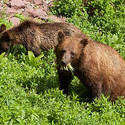 Montana: Glacier NP: animals, insects