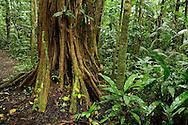 Rainforest, Napo Wildlife Center, Quichua Community, Yasuni National Park, Rainforest, Amazonia, Ecuador