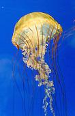 Oregon animals, sea life