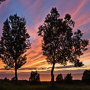 At sunset, lines of pink, magenta, orange, and yellow clouds form patterns against blue sky over Cook Inlet, Ninilchik, Alaska, USA. Trees make silhouettes. Ninilchik is on the west side of the Kenai Peninsula, 38 miles southwest of Kenai on Sterling Highway, 188 miles by road from Anchorage and 44 miles from Homer. Ninilchik hosts the annual Kenai Peninsula State Fair. The Alaska Native Claims Settlement Act recognized Ninilchik as an Alaska Native village.