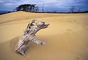 Image of Oregon Dunes National Recreation Area, Oregon, Pacific Northwest