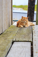 Stray cat on the dock's at Avon fishing dock.