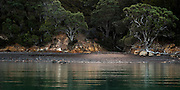 A remote New Zealand beach, where bush meets sea.  Photographed from a boat at the eastern end of Waiheke Island, in fading light.