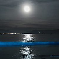 BIOLUMINESCENCE in the heart of Ballinskelligs, Southwest Kerry, Ireland, overlooking Waterville. <br /> <br /> A natural phenomenon lights up the water of Ballinskelligs Beach, making the sea shine with a surreal blue light.<br /> <br /> The surreal scene arises not from magic, but from plankton that have evolved to glow in order to startle or distract fish and other potential predators. Some scientists call it the &ldquo;burglar alarm effect&rdquo;: by lighting up, the plankton draw even larger predators that, in turn, eat the animal threatening them. The phosphorescence only occurs when the microorganisms, which exist worldwide, are agitated &ndash; such as when the water crashes onto the shore, someone steps on the wet sand or a paddle hits the waves.