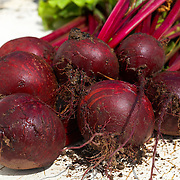 Beetroot Boltardy Beta Vulgaris Root Vegetable