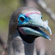 ECUADOR: Galapagos Islands
