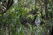 Diyabubula, the garden and home of artist Laki Senanayake.
