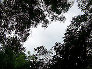 Looking at the sky through the trees.