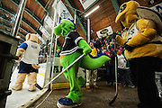 Local mascots take the ice for a scrimmage during intermission for Rally's (UVM's mascot) birthday during the men's hockey game between the St. Lawrence Saints and the Vermont Catamounts at Gutterson Field House on Friday night December 12, 2014 in Burlington, Vermont. (BRIAN JENKINS, for the Free Press)